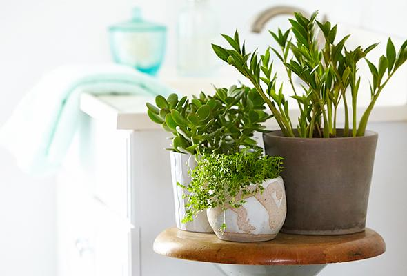the-6-best-plants-for-your-bathroom-1-size-3
